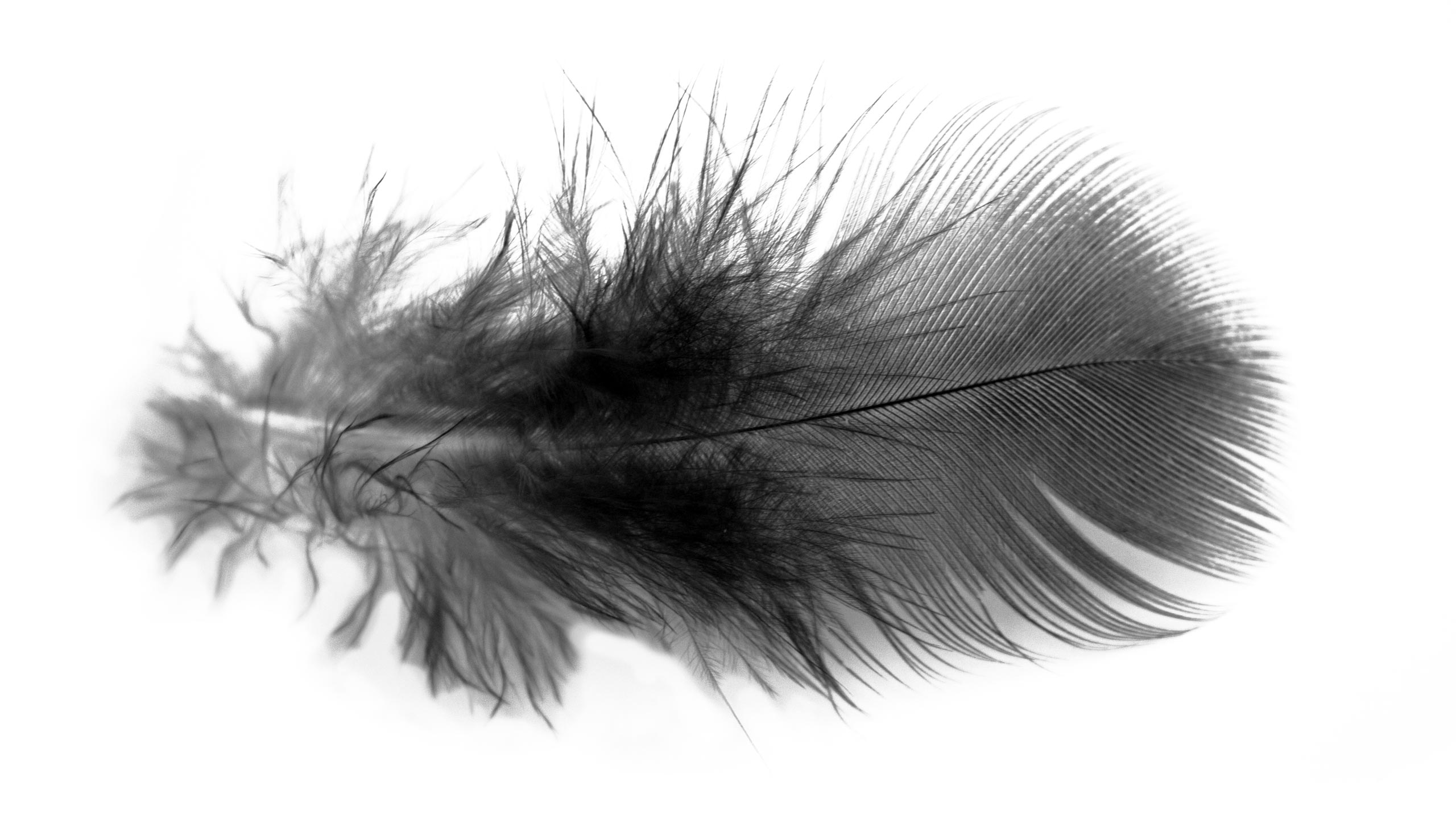 On Common Ground feather